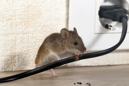 Pest Control in Canbury, Coombe, KT2. Call Now! 020 8166 9746
