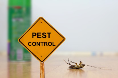 Pest Contol in Canbury, Coombe, KT2. Call Now 020 8166 9746